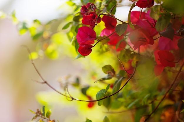 Plante de fleurs roses