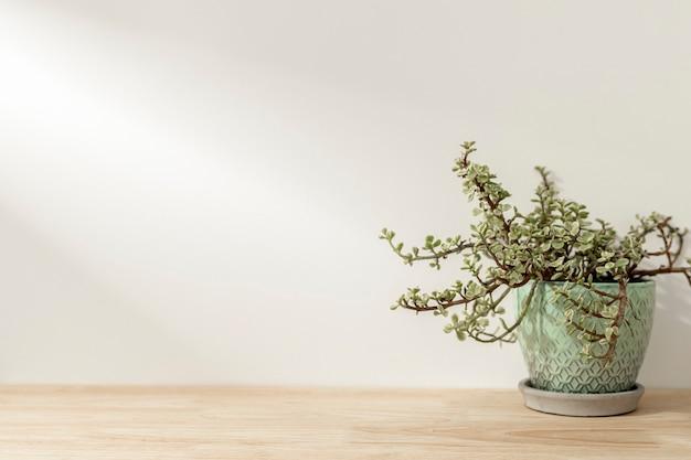 Plante sur fond d'étagère en bois
