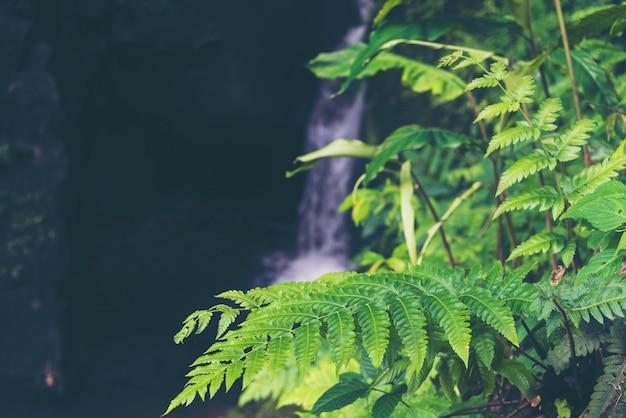 Plante de forêt tropicale humide, champ de la nature
