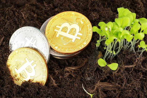 Plante de germination et croissance du bitcoin de la crypto-monnaie bitcoin