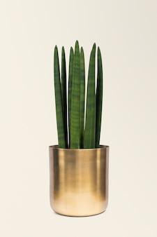 Plante d'intérieur dans un pot en laiton