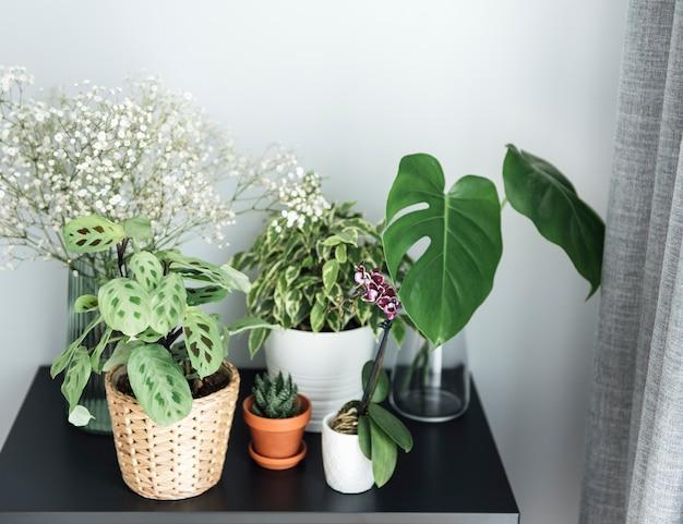 Plante d'intérieur à la maison. différentes plantes d'intérieur sur la table