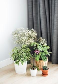 Plante d'intérieur à la maison