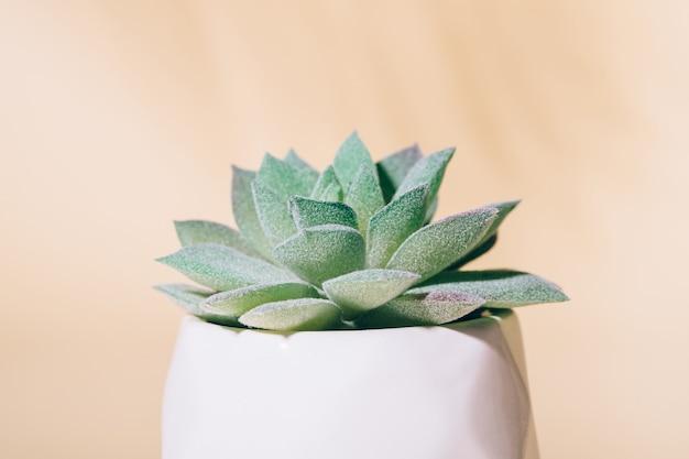 Plante d'intérieur succulente artificielle en pot, macro