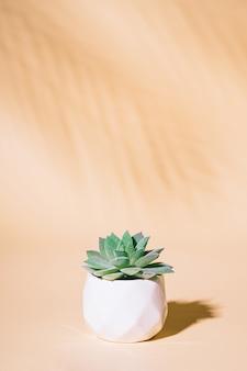 Plante d'intérieur succulente artificielle en pot