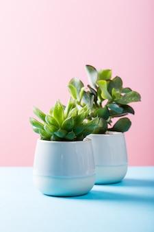 Plante d'intérieur succulente dans un pot en céramique gris