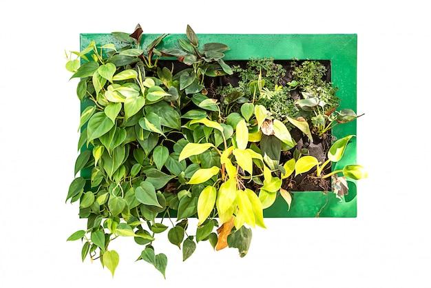 Plante d'intérieur suspendue pour la décoration