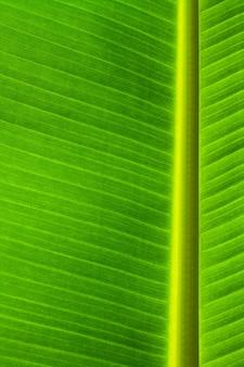 Plante de jardin tropical nature fraîche