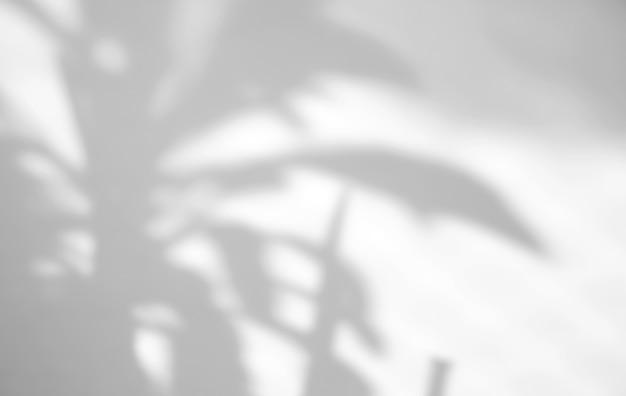 Plante laisse superposition d'ombre naturelle sur fond de texture blanche, pour superposition sur la présentation du produit, toile de fond et maquette, concept saisonnier d'été