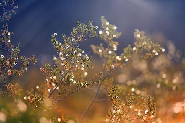 Plante et lumière du soleil