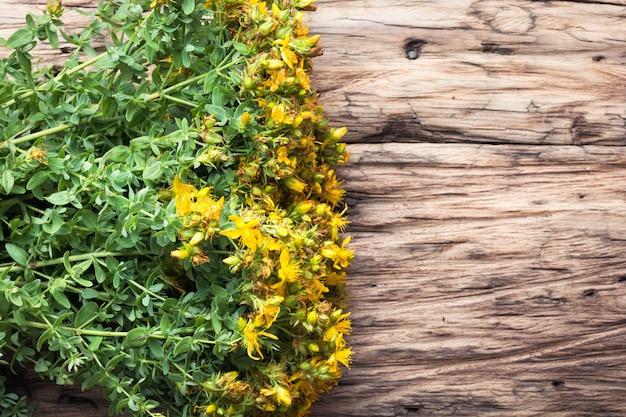 Plante médicinale aux fleurs