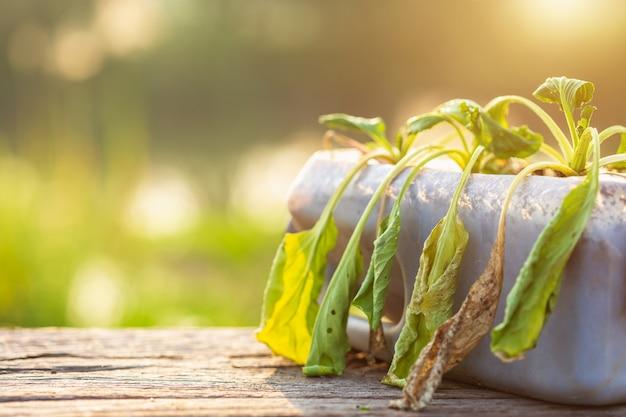 Plante morte ou légume dans une bouteille en plastique sur une table en bois avec la lumière du soleil au petit matin