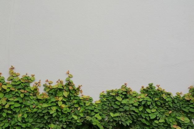 La plante sur le mur gris