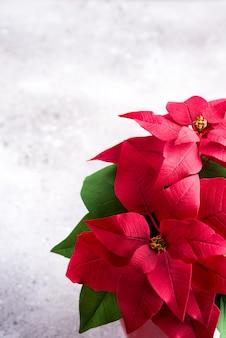 Plante de noël poinsettia rouge sur une pierre grise avec fond. lay plat. carte-cadeau de noël