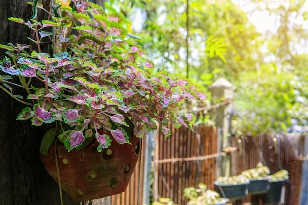 La plante ornementale dans le pot accroché au mur.