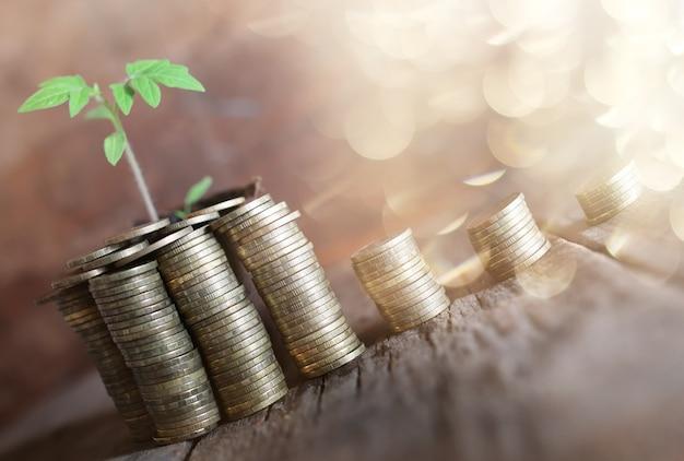 Plante avec des pièces de monnaie sur fond de bois
