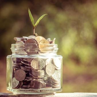 Plante de plus en plus de pièces de monnaie avec filtre effet rétro style vintage