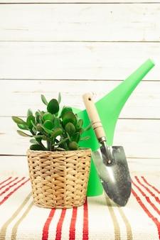 Plante en pot dans une table