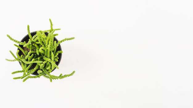 Plante en pot sur fond blanc