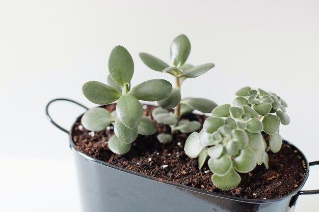Plante en pot sur un fond isolé