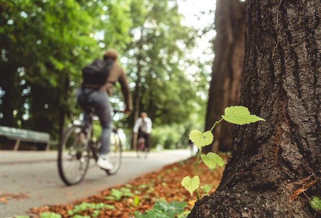 Plante poussant sur l'écorce des arbres