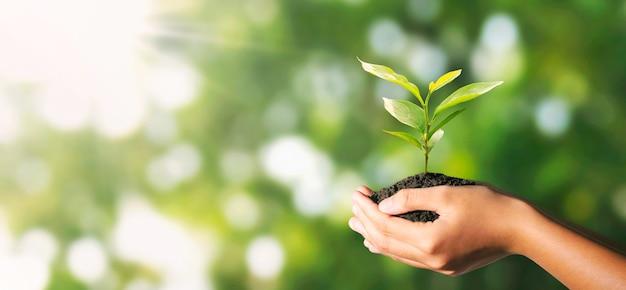 Plante poussant à la main sur une nature verdoyante avec la lumière du soleil. concept de l'environnement écologique