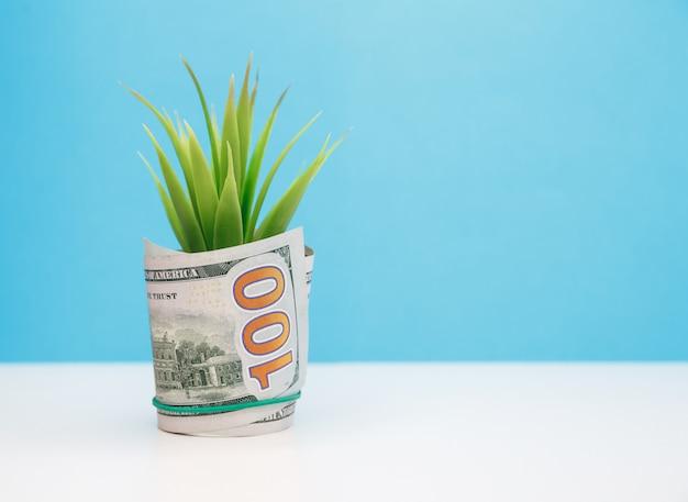 Plante poussant à partir de 100 dollars sprout couvert de billets en dollars