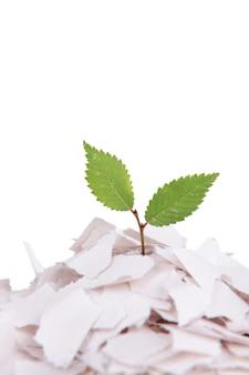 Plante poussant à partir de papier isolé sur blanc