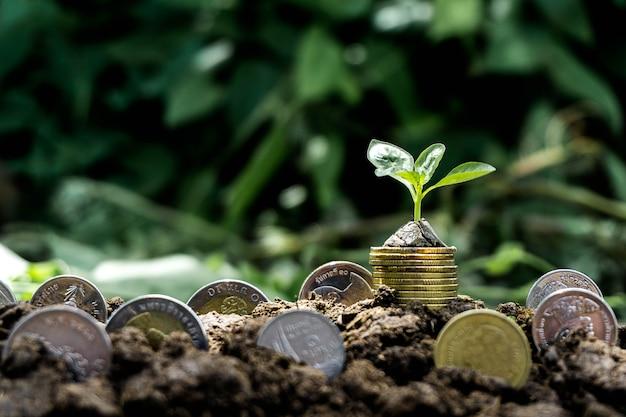 Plante poussant à partir de pièces de monnaie sur le sol