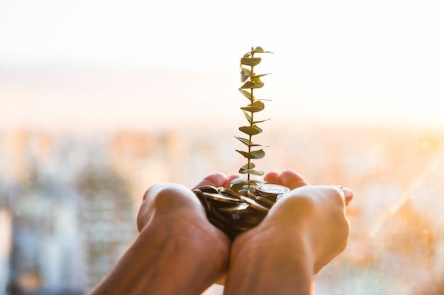 Plante poussant à partir de pièces de monnaie