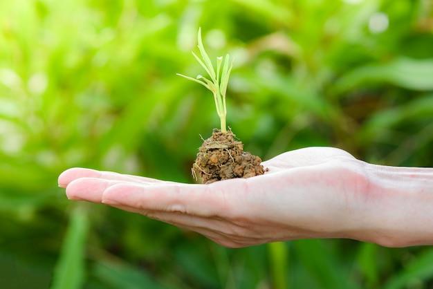 Plante poussant sur le sol dans la main avec la jeune plante verte en croissance