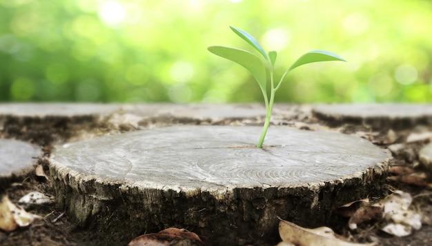 Plante poussant sur une souche d'arbre