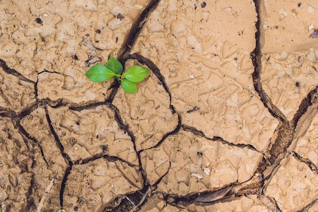 Plante poussant sur terre fissurée