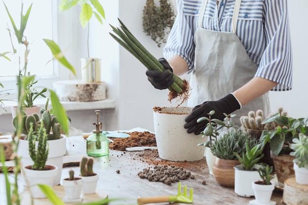 Plante de repiquage jardinier femele dans des pots classiques sur la table en bois. concept de jardin potager. le printemps