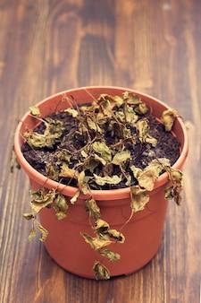 Plante sèche sur pot en plastique