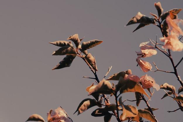 Plante séchée en automne