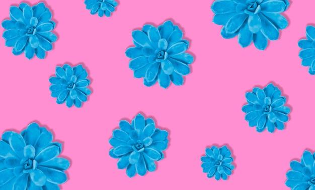 Plante succulente colorée sur fond de couleur rose. ombre dure. lumière forte. bleu et rose.