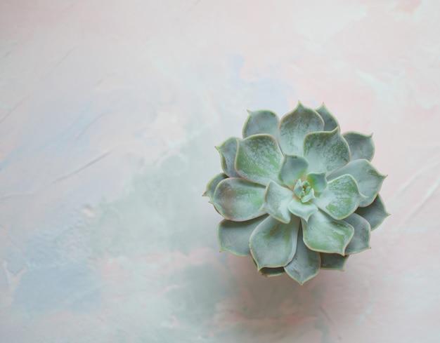 Plante succulente dans un pot en béton décoration de chambre moderne et tendance espace de copie blanc vue de dessus style scandinave