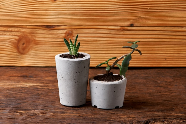 Plante succulente dans un pot en béton fait main dans une décoration de chambre