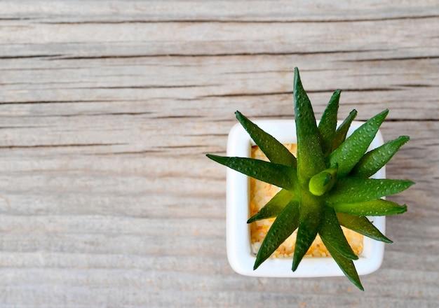 Plante succulente décorative dans un pot blanc sur fond de bois ancien avec un espace pour le texte.