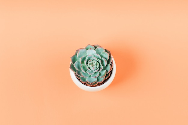 Plante succulente sur orange pâle