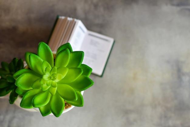 Plante succulente et petit livre avec des poèmes sur fond de béton texturé. espace de travail