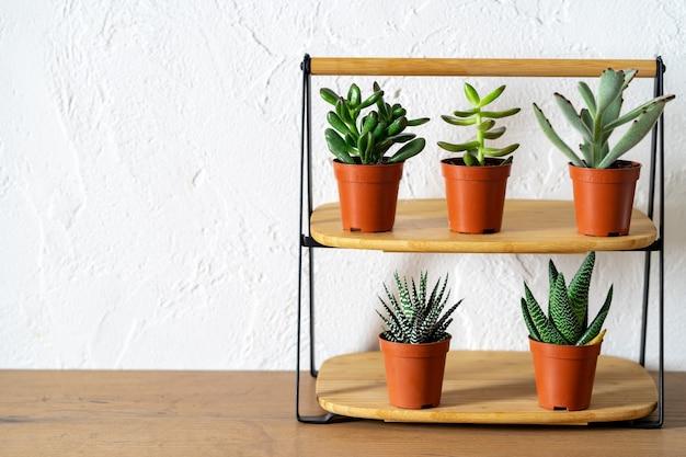 Plante succulente en pot style de vie décoration de la maison lieu de travail à la maison