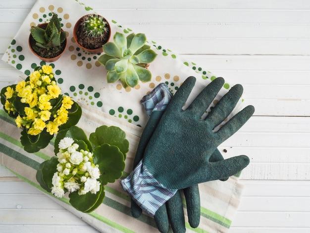 Plante succulente en pot vif avec une paire de gants sur la serviette sur la table blanche
