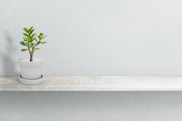 Plante succulente sur vase isolé sur ornement vase blanc