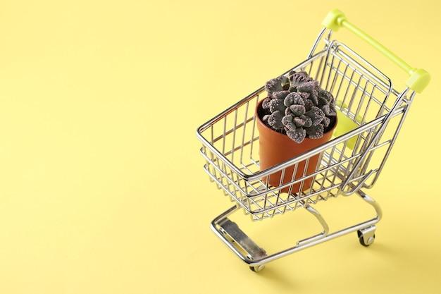 Plante succulente verte titanopsis en chariot shopping sur fond jaune. espace pour le texte