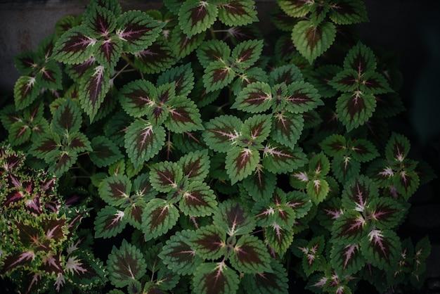 Une plante tropicale se bouchent dans les fourrés denses de la jungle. tropiques