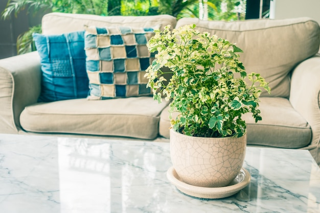 Plante de vase