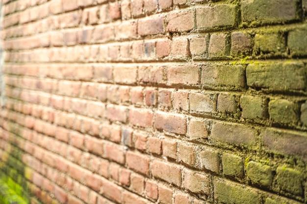 Plante verte sur composé de mur de maison