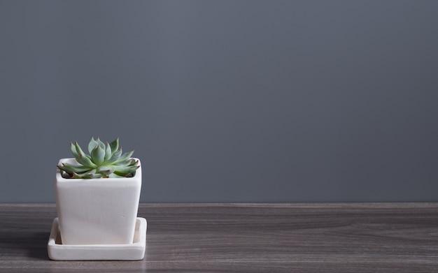 Plante verte de cucculent dans le pot de fleur blanche. plantes d'intérieur succulentes en pot sur le plancher en bois